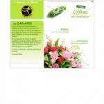 catalogue interflora